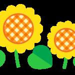 かわいいヒマワリ(向日葵)のイラスト
