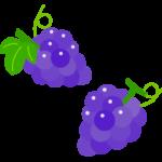 二房のぶどう(葡萄)のイラスト