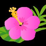 ピンクのハイビスカスのイラスト