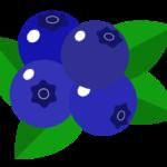ブルーベリーのイラスト02