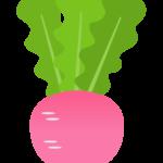 赤カブ(野菜)のイラスト