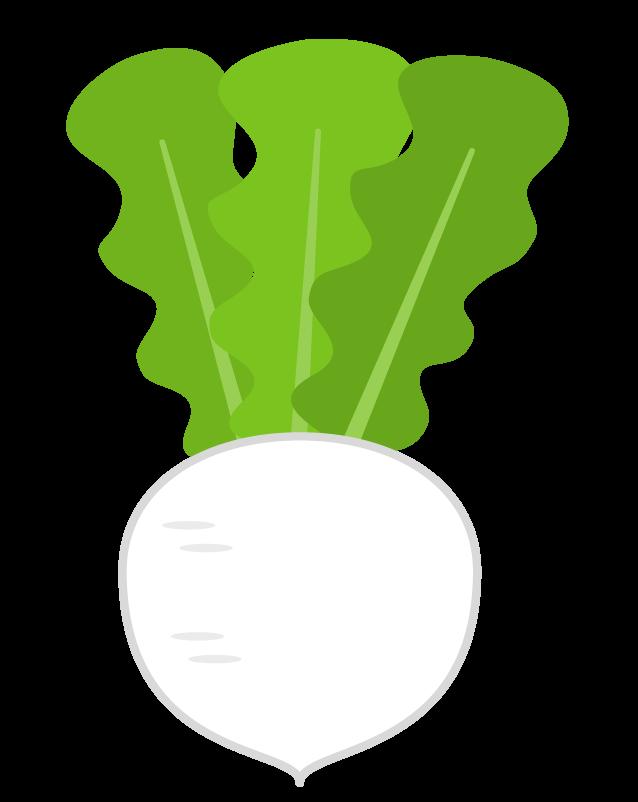 カブ(野菜)のイラスト