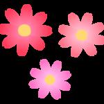 コスモスの花びらのイラスト