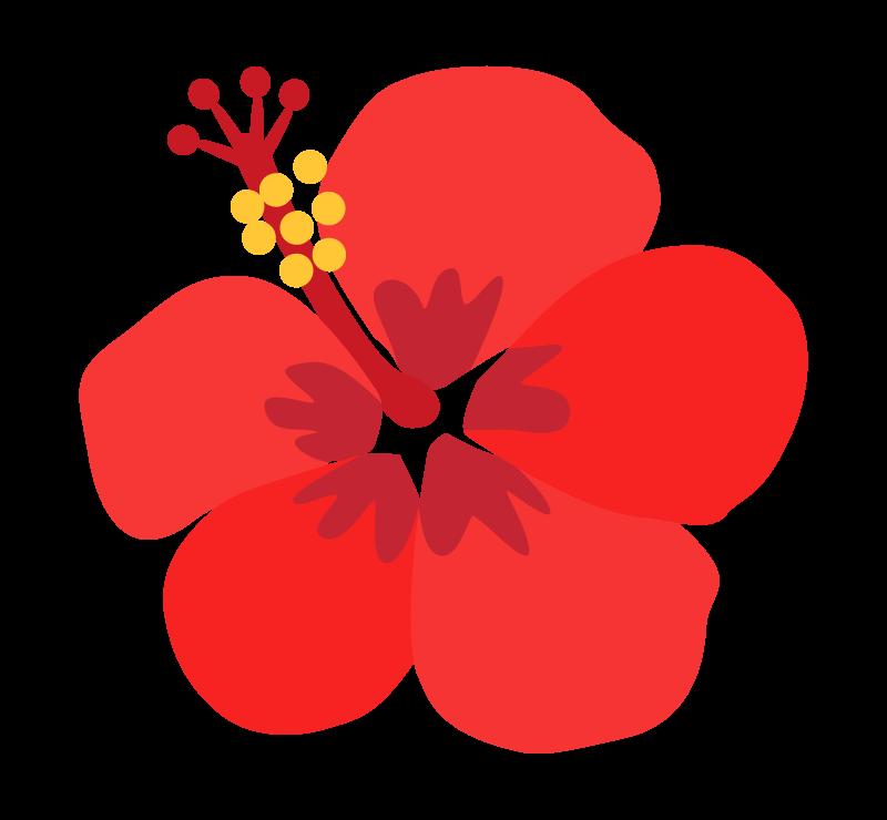 赤い一輪のハイビスカスのイラスト