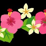 ピンク色のハイビスカス(二輪)のイラスト