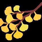 イチョウで紅葉した木の枝のイラスト