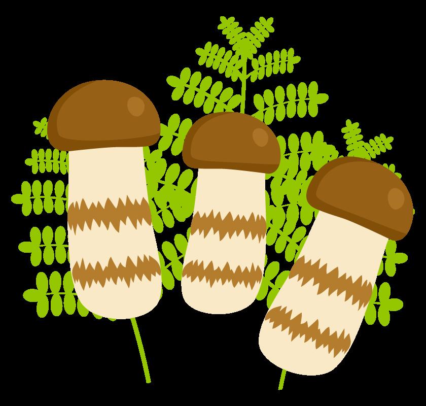 松茸のイラスト02