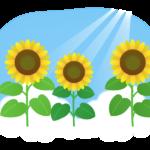 青空とヒマワリ(向日葵)のイラスト