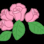 ピンク色のバラのイラスト