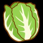 白菜のイラスト02