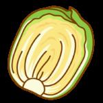 カット白菜のイラスト