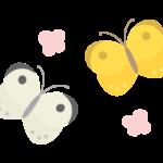 かわいい二匹の蝶々のイラスト