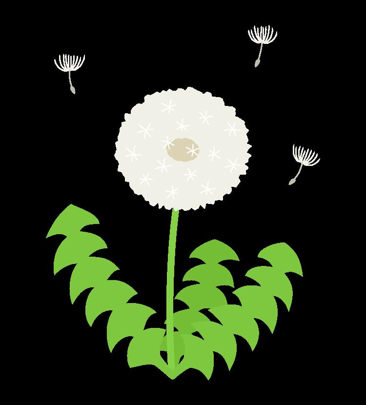 一輪のたんぽぽの綿毛のイラスト