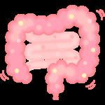健康な大腸のイラスト