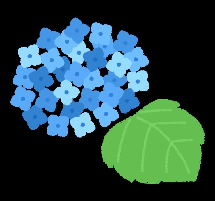 梅雨・紫陽花(あじさい)の花のイラスト