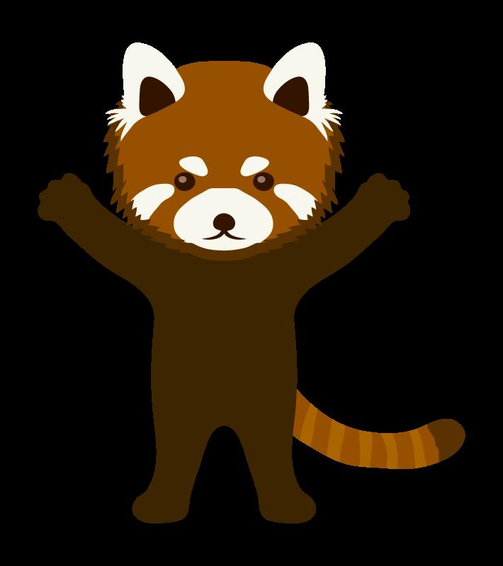 レッサーパンダ(立ち姿)のイラスト