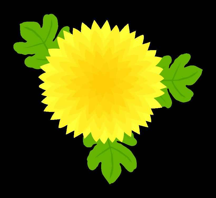 菊の花(大輪)のイラスト