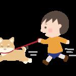 走っている柴犬と男の子イラスト