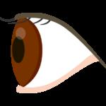 横からの眼球のイラスト