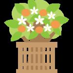 ひな祭りの橘のイラスト