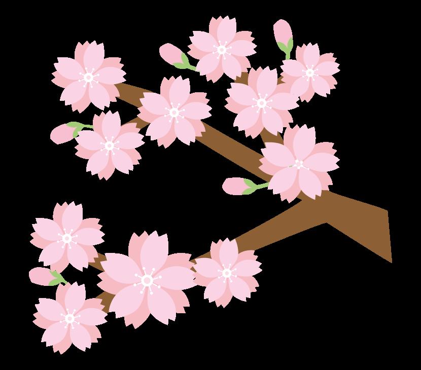 枝と桜のイラスト