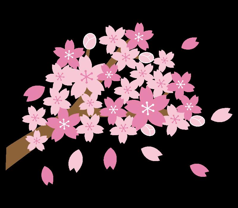 満開の枝付きの桜のイラスト