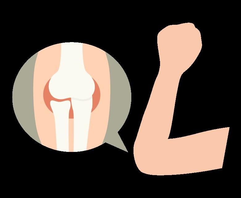 肘関節のイラスト