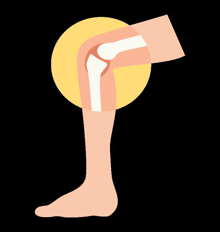 膝関節のイメージイラスト