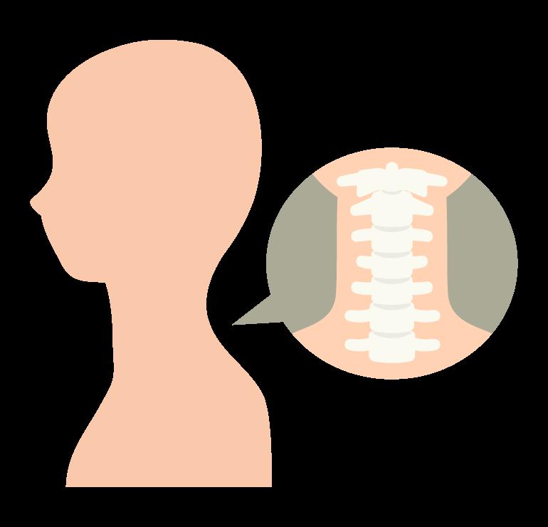 首関節のイラスト