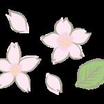手書き風の桜の花びらのイラスト
