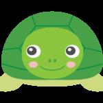 正面を向いているかわいい亀のイラスト