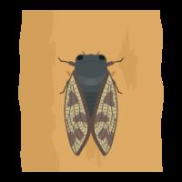 蝉(セミ)のイラスト