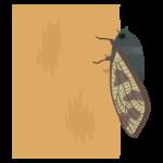 木にとまっている蝉(セミ)のイラスト
