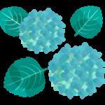 緑色の紫陽花(あじさい)のイラスト