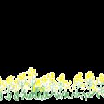 手書き風の菜の花の下段フレーム・飾り枠のイラスト