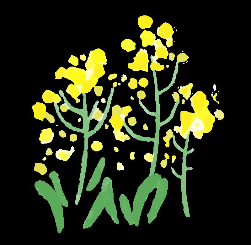 水彩画タッチの菜の花のイラスト