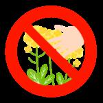 「菜の花を採らないでください」のイラスト