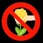 「菜の花を採らないでください」のイラスト02