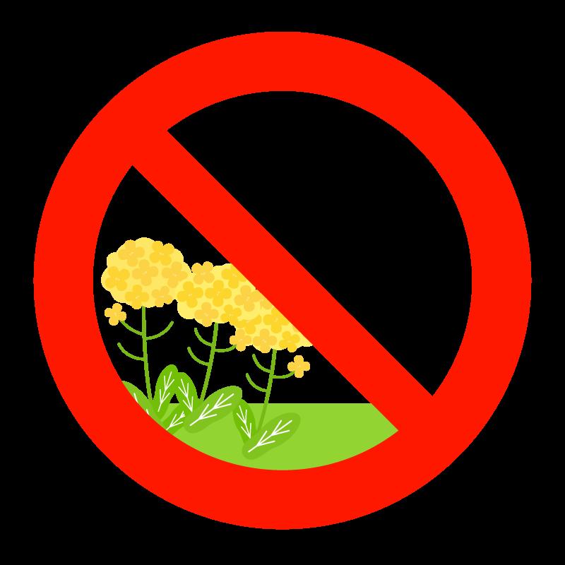 「菜の花畑に入らないでください」のイラスト
