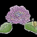 手書き風の紫陽花とカタツムリのイラスト