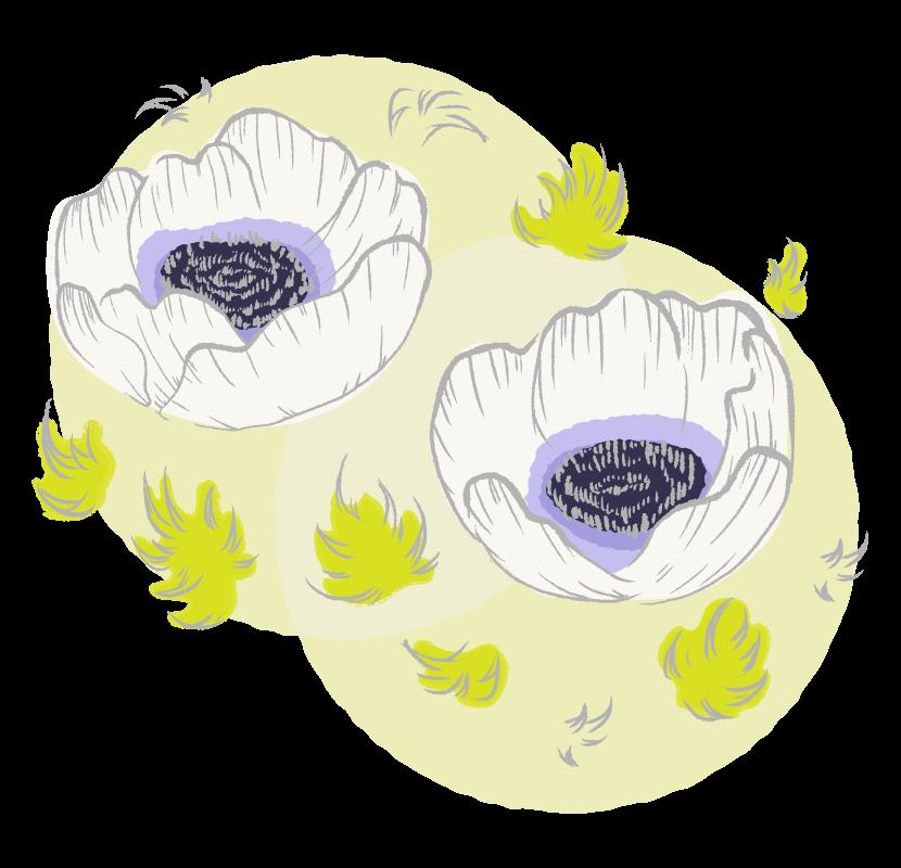 手書き風のアネモネの花のイラスト