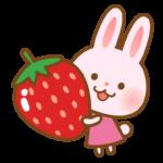 大きな苺とかわいうさぎさんのイラスト