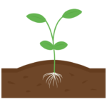 発芽・土壌のイラスト