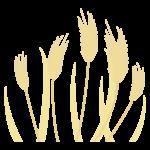 麦のイラスト