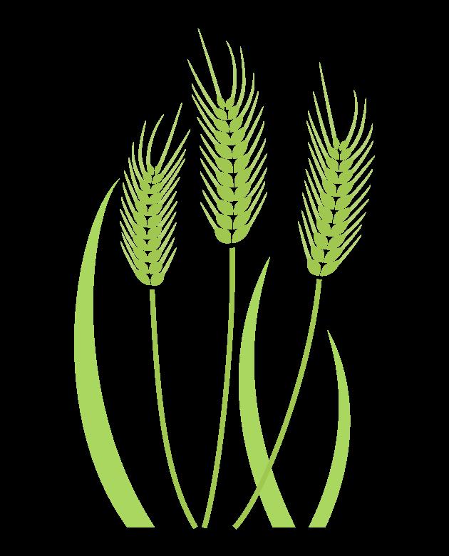 麦のイラスト02