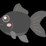 かわいい黒い金魚のイラスト