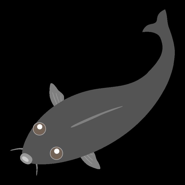 かわいい黒色の鯉のイラスト