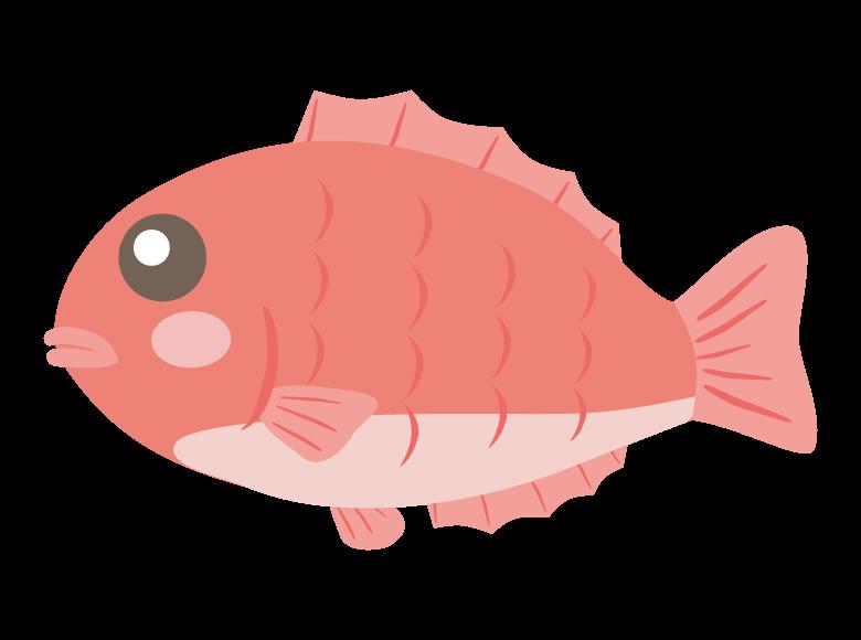 かわいい鯛のイラスト