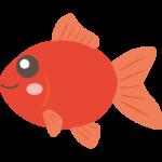 かわいい金魚のイラスト