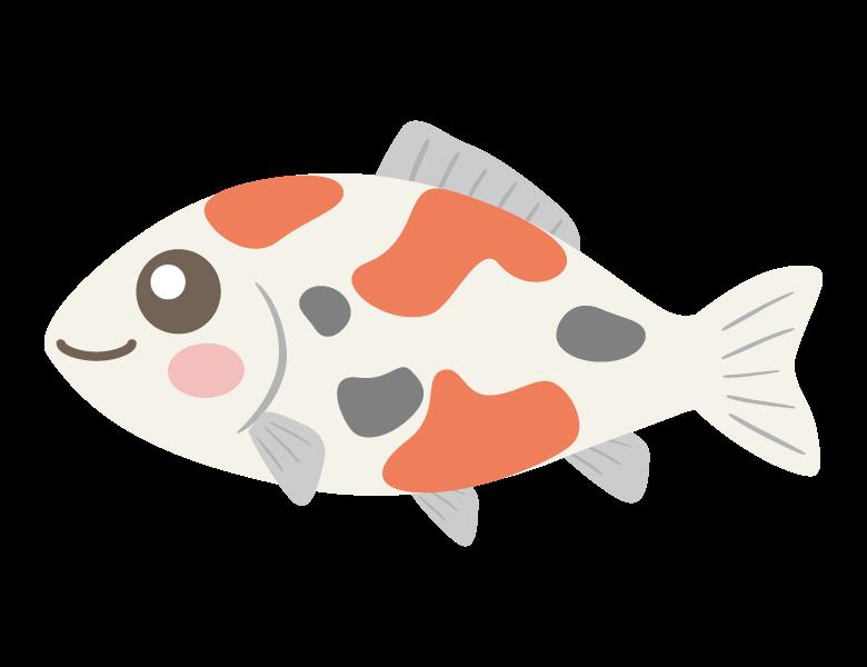 かわいい錦鯉のイラスト